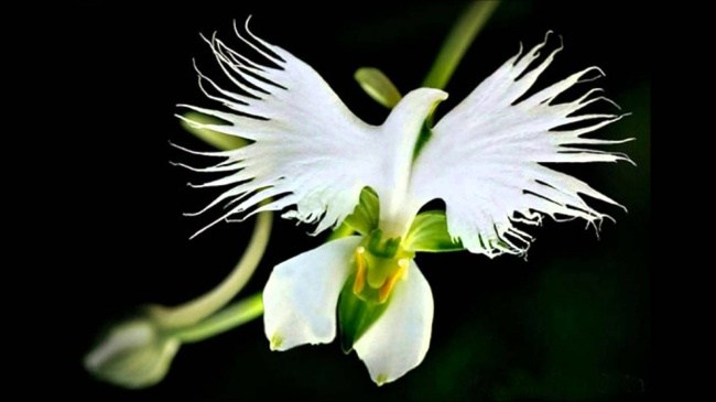 10 Flowers That Are So Beautiful And Illusion Forming That You Will Be Amazed To See Them