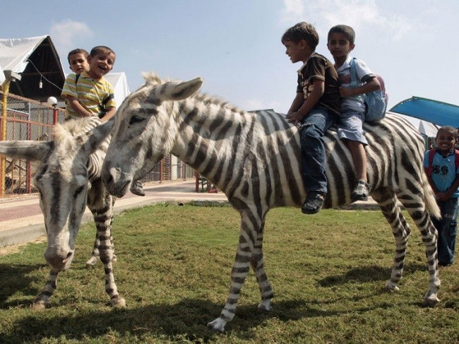 kids playing on Painted Zebra