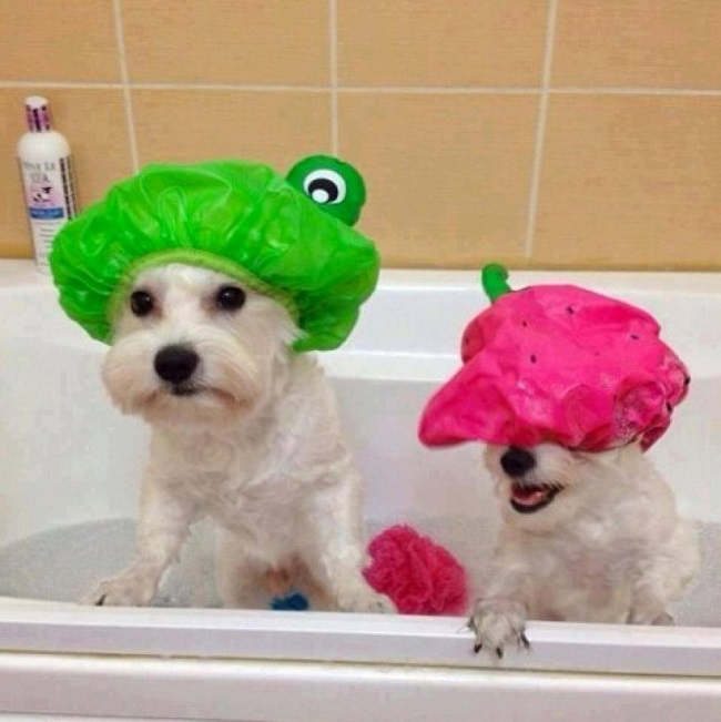 shower caps for pets