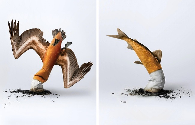 """Cigarettes butts are crashing our eco-system"""