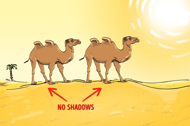Desert and Camels solution