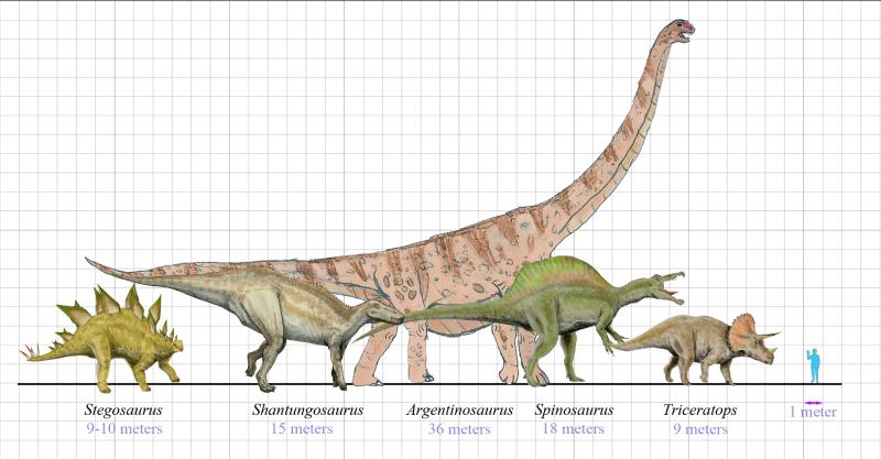 Difference of Size of dinosaurs