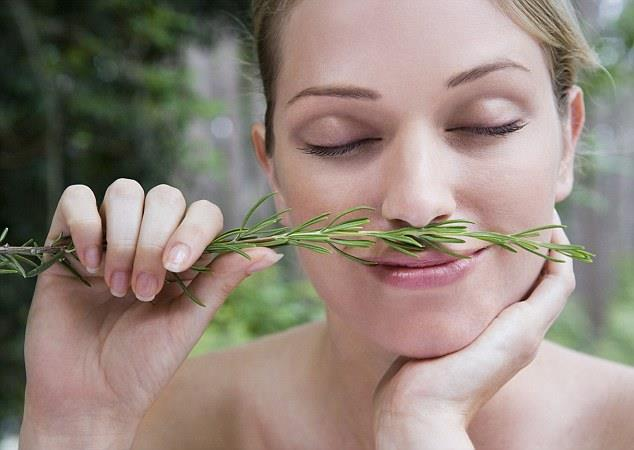 Rosemary activates your super memory