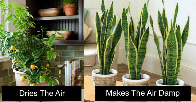 10 Plants to Purify and Create the Perfect Microclimate within Your Home