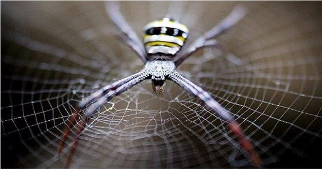 Did You Know That Spider Webs Can Be Used to Heal Wounds and Injuries
